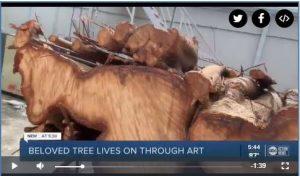 ABC Action News Tampa - Nick Reale Woodturning - Banyan Tree